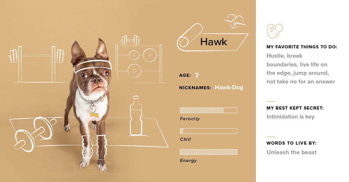 This month's #DogsofTG star is our favorite snaggletoothed terrier, Hawk. He really puts the terror in terrier.  🏋️