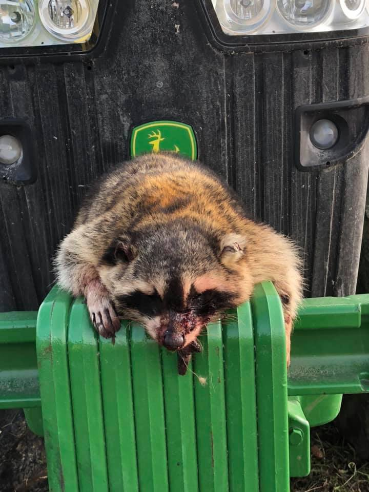 What else can go wrong? Dennis in Henry Co. Illinois shared this pic of his latest #crop19 challenge. This guy got into his combine engine compartment. #raccgone<br>http://pic.twitter.com/ZbiVWsoVeu