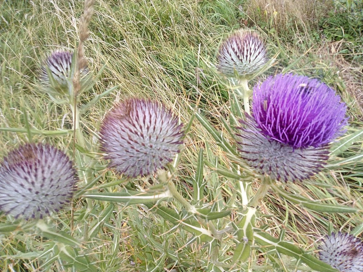 RT @zm_style: #FibonacciDay #nature #Purple  📸 by me https://t.co/1T0qojDaHR
