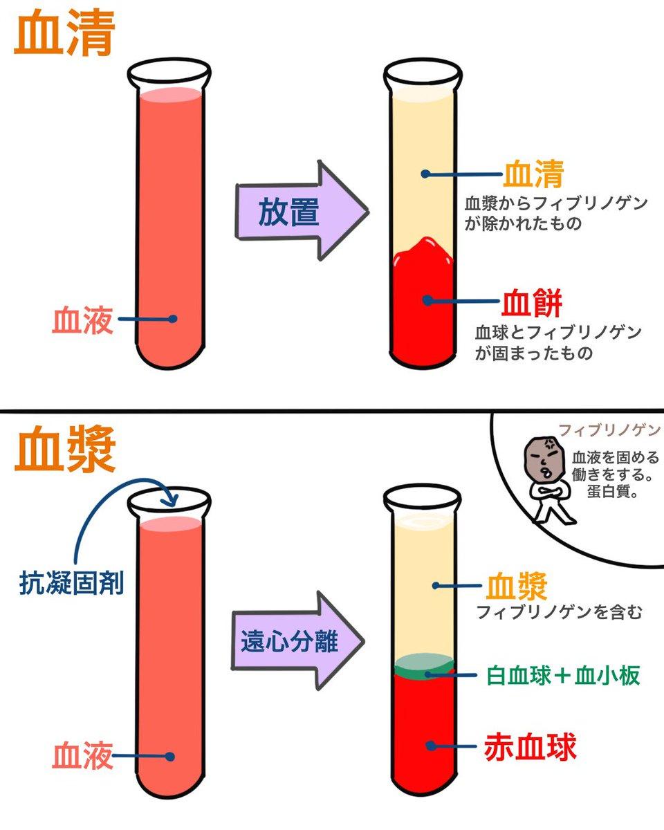 血清 と 血漿 の 違い
