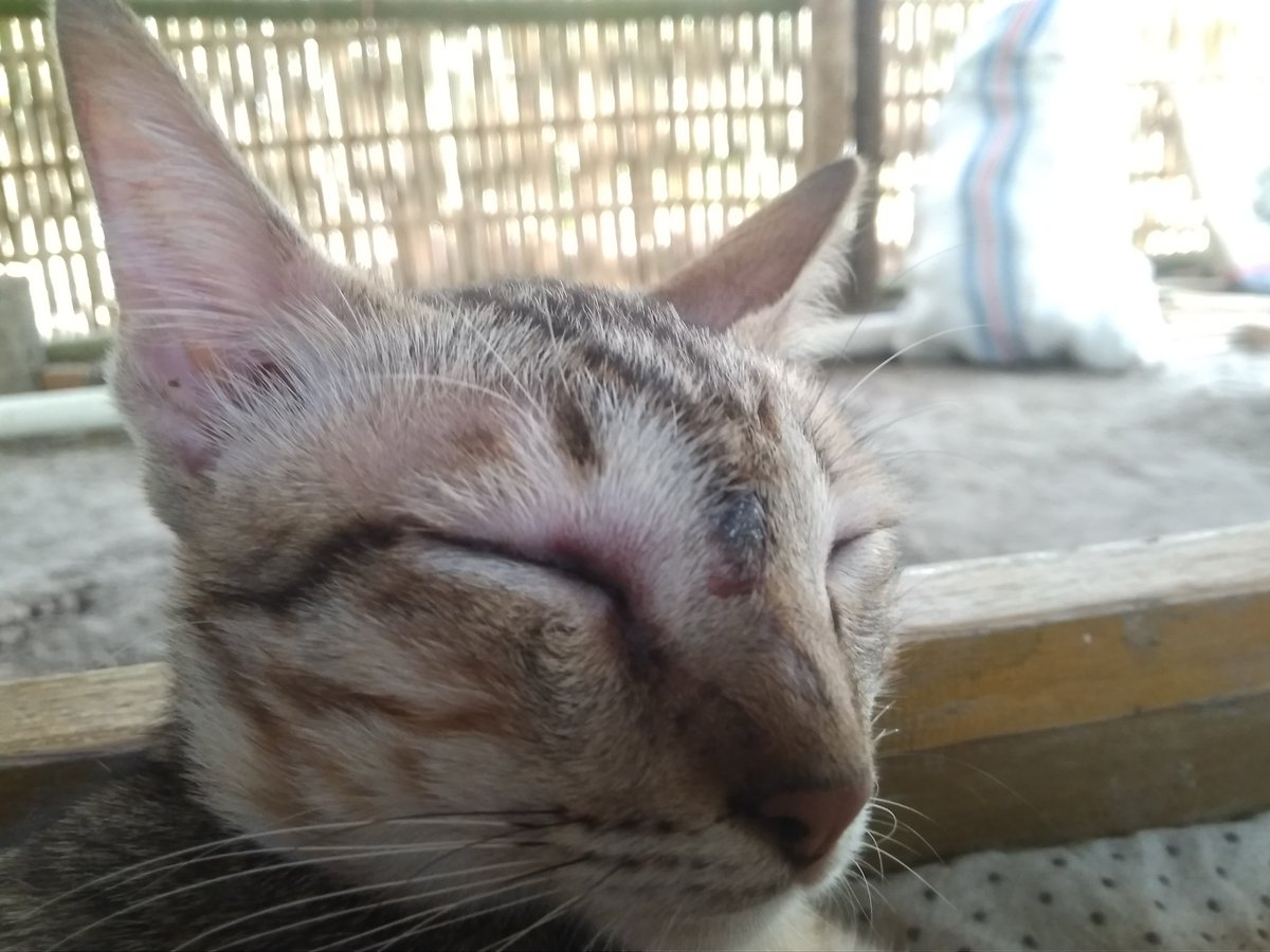 Gambar Lucu Kucing Ngopi