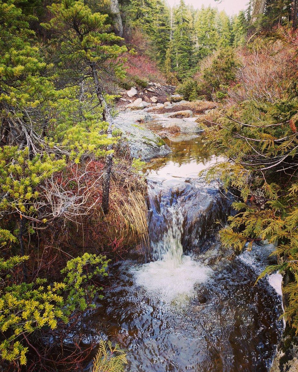 #Cypress #fallhiking #hiking #hikebc #hike #vanvouvertrails #outdoorvancouver #hikingculture #hikingadventures #beautifulbc #hellobc