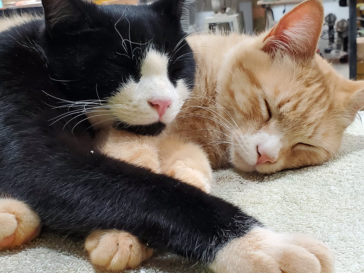 https://www.etsy.com/shop/greencottagedesign…  OUR SHOP KITTENS ARE WORN OUT!   #MondayMorning #mondaythoughts #Naptime #SHOPCATS #kittens #cats #catslife #MondayMood #signshop #customsigns #signage #signs #Sleepyhead #BlackFriday #USA #HandmadeHour #etsyshop #giftspic.twitter.com/mQeOeFLu3I