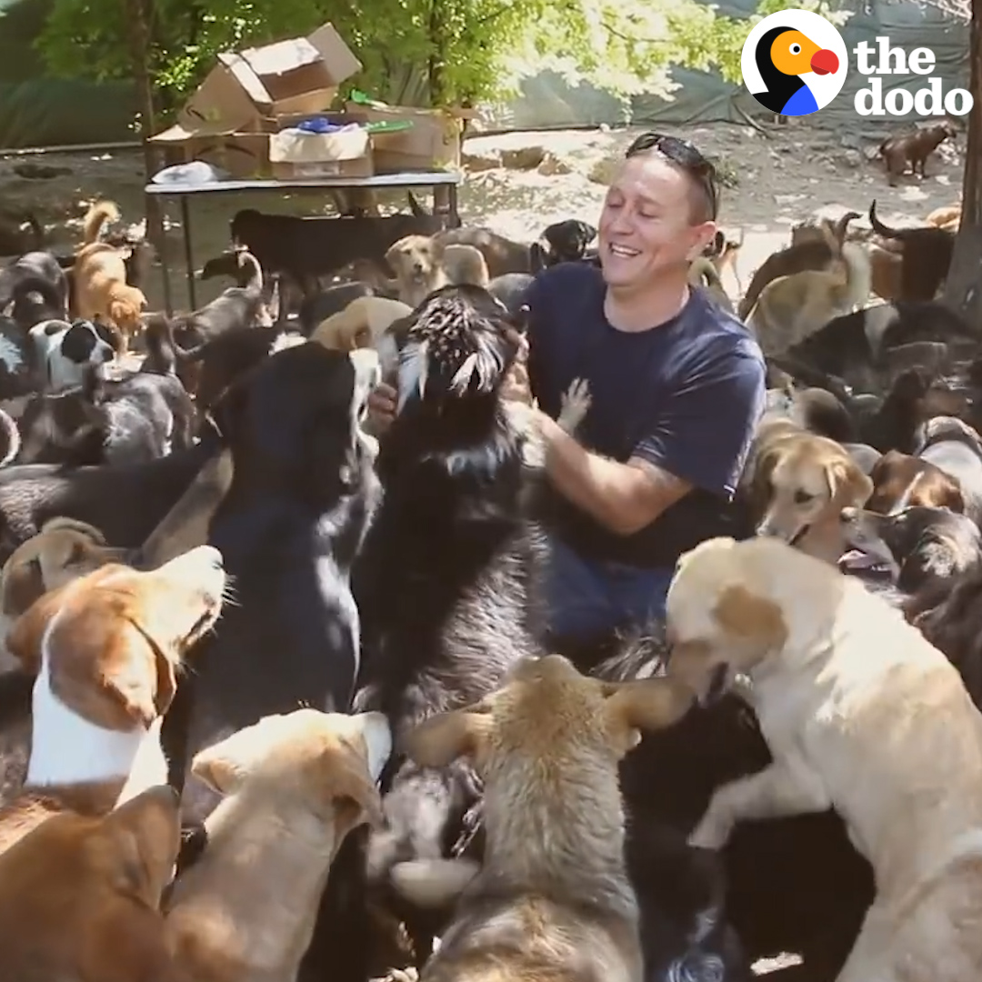 This guy never planned to open an animal shelter — then he met hundreds of dogs who needed his help 💛