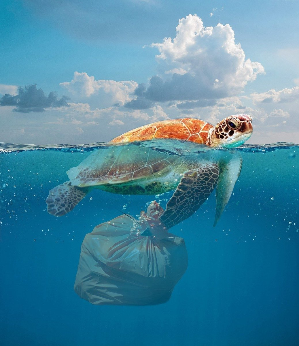 Each year tonnes of plastic enters our oceans, change is needed and change starts with us all.  @BradfordCollege students and staff, come along to the  plastic free pop up shop this Thursday 11.30-1.30, ground floor of DHB #plasticfreeliving #plasticfreeoceans #changeiscomingpic.twitter.com/LlmZpm5U9s