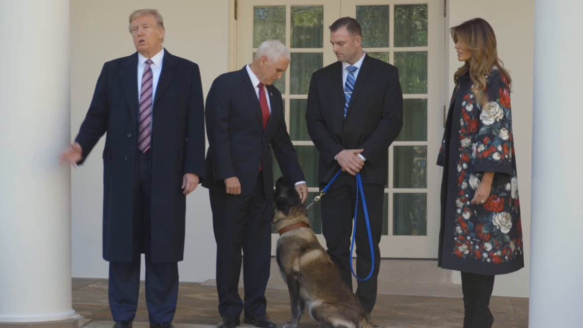 Military dog injured in Baghdadi raid gets hero's welcome at White House
