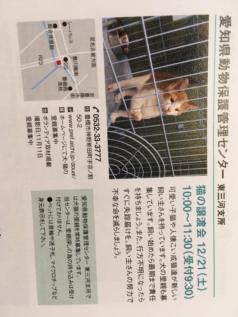 犬 愛知 譲渡 会 県