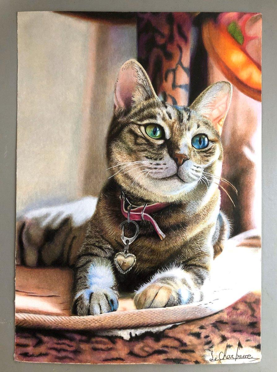 長靴をはいた猫さんの投稿画像