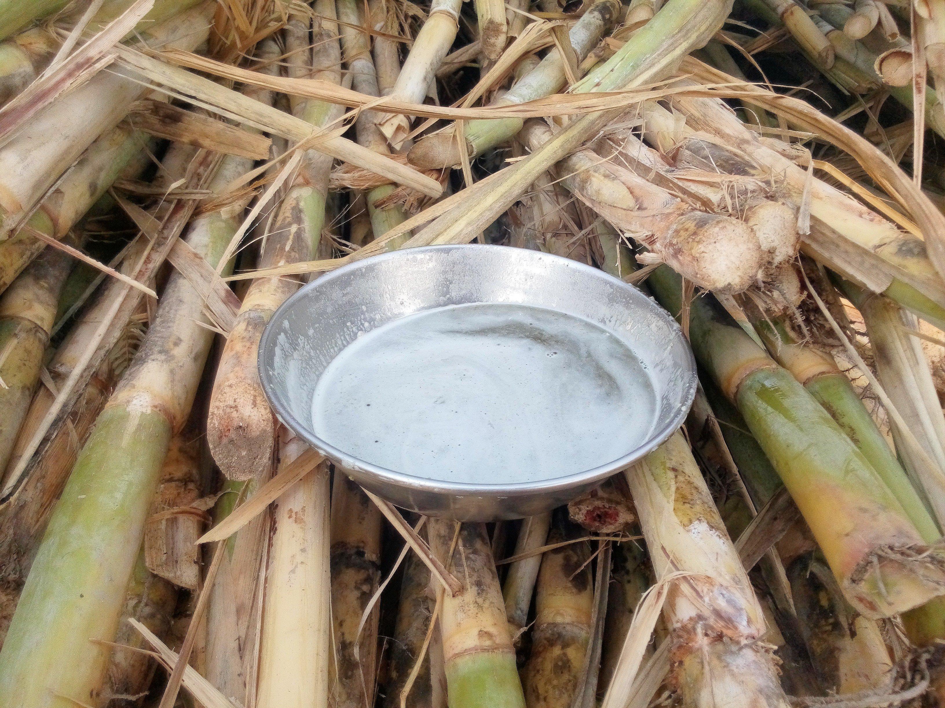Sugarcane nectar