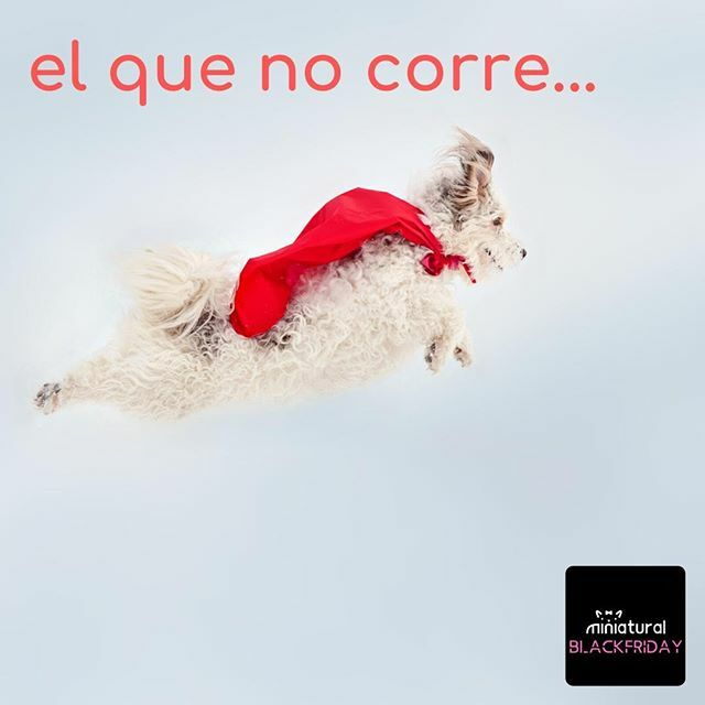 Que no se te escapen las ofertas del BLACK FRIDAY!!! Son Unidades LImitadas... ... #blackfridayminiatural #miniatural #ropaperros #ropaperrospequeños #puppy #ilovemyyorkie #ilovemychihuahua #ilovemypomeranian #ilovemybichon https://ift.tt/33mb1jNpic.twitter.com/s2s9Qr6cXL