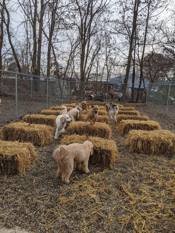 The pups loved playing in the straw today - very enriching and exhilarating! 😃🐶❤️ #barktownusa #doggydaycare #puppyplaytime #socute