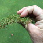 Image for the Tweet beginning: Even the thinnest of fairway