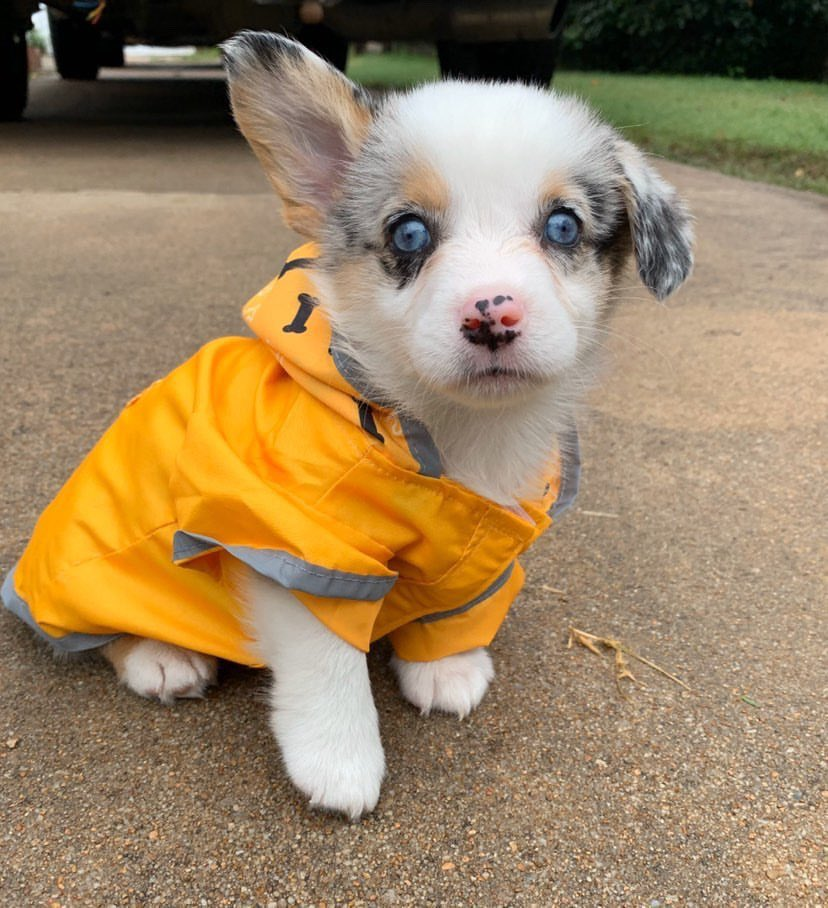 This is Silas. He wanted to show you his new raincoat and announce he's challenging the next storm he sees. 12/10 would be his backpup