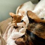 ニャーニャートレイン?猫ちゃんがきれいに整列してる!