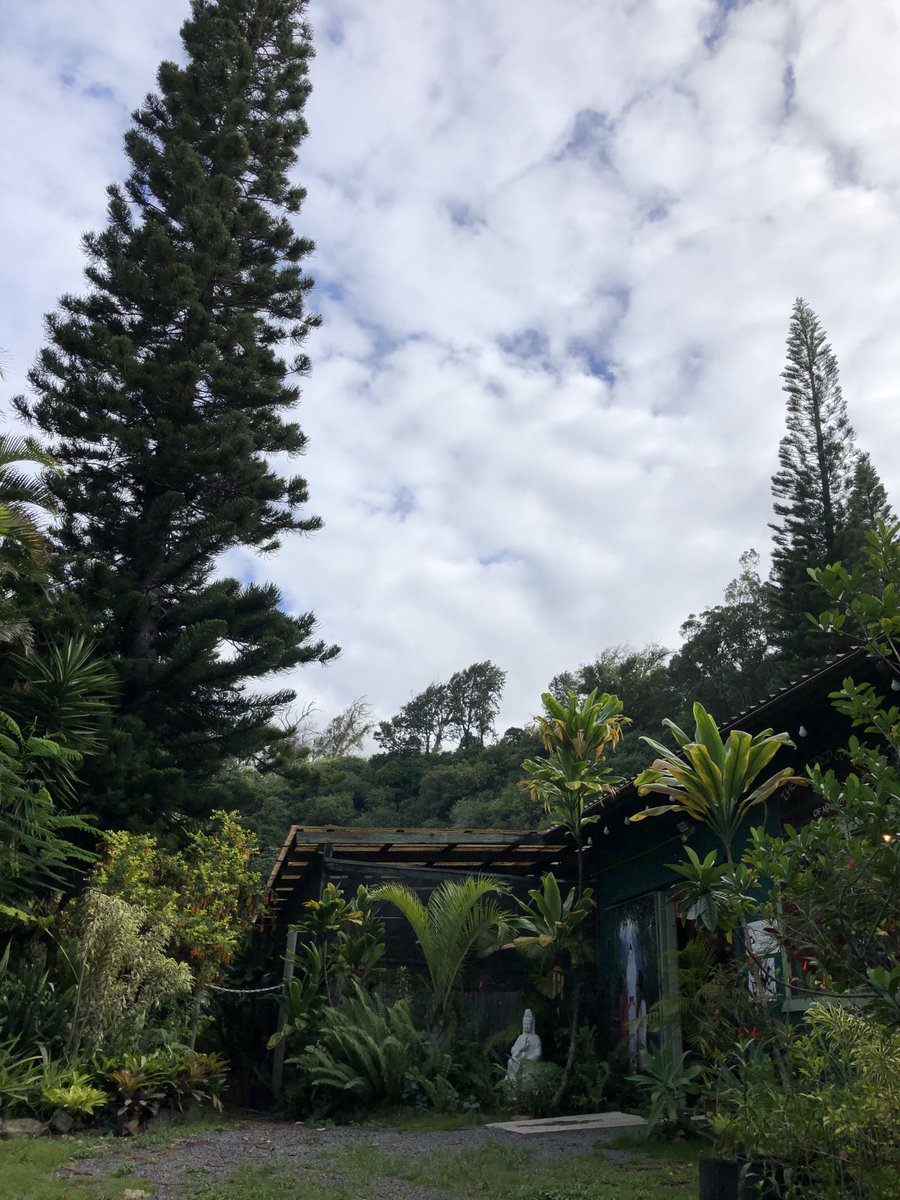 test Twitter Media - Overcast and warm at the Sacred Garden in Makawao.  #cmweather #Maui #SacredGarden #Makawao #MagicalMaui #Mauinokaoi https://t.co/7LlrijEUsJ