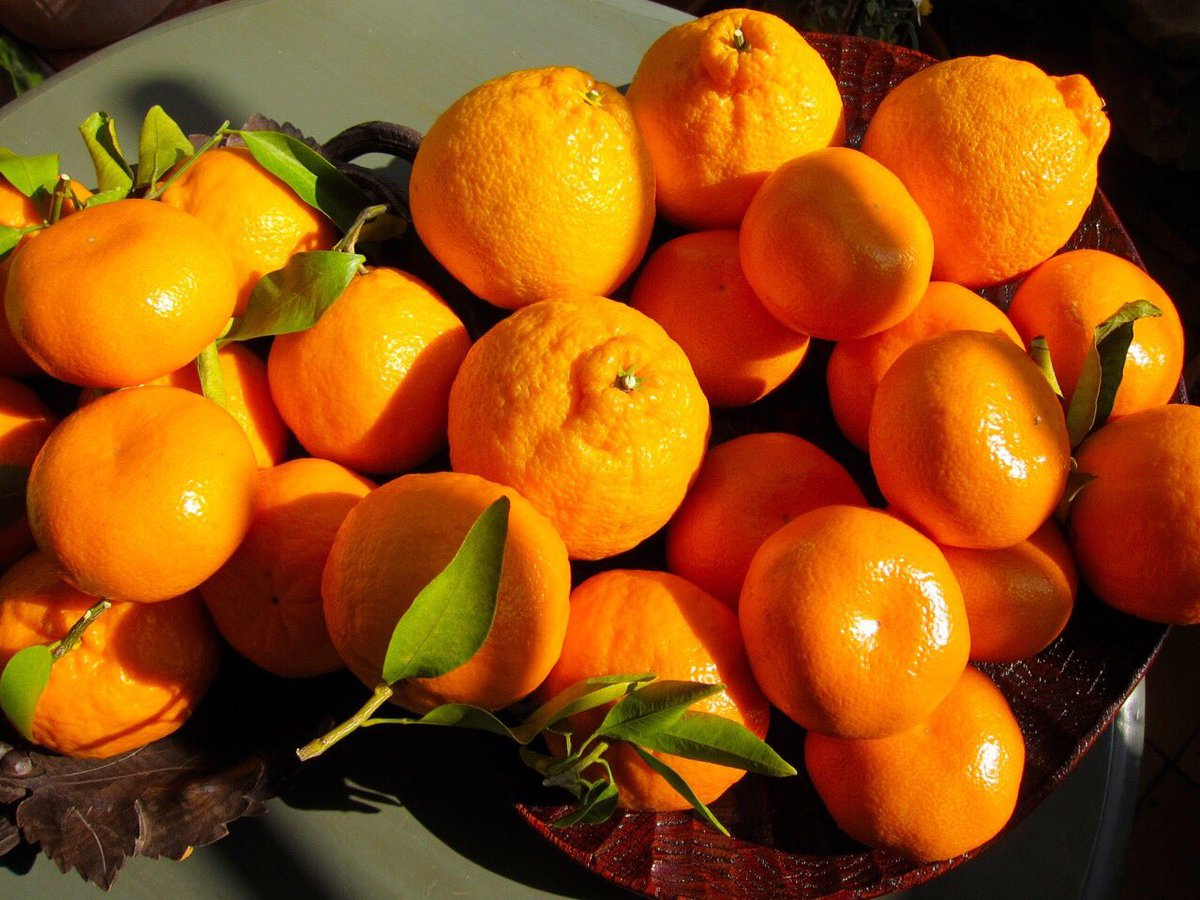 картинки абрикос и апельсина емкость