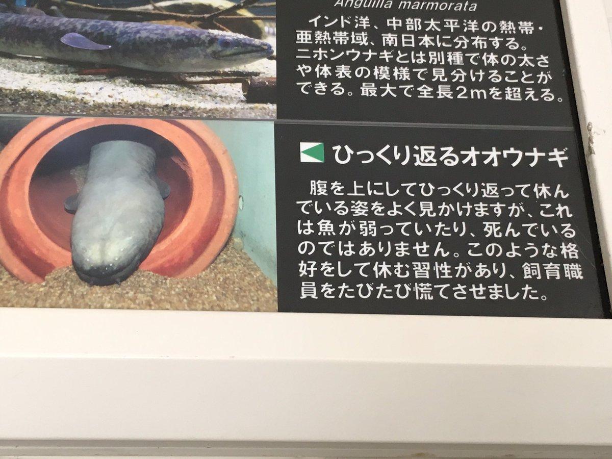 高橋のぞむ@いきもにあありがとうございましたさんの投稿画像