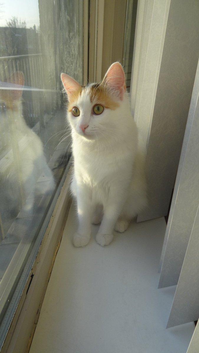 är tulpaner giftiga för katter