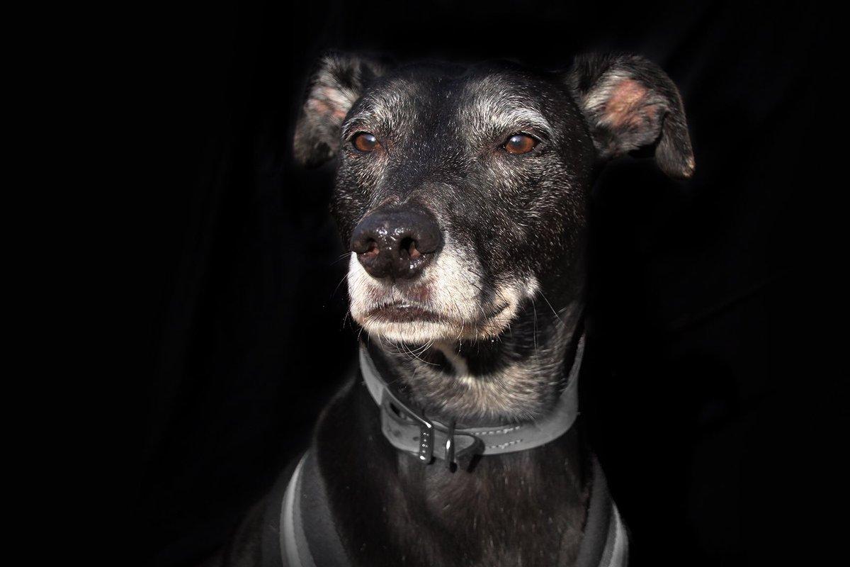 🖤Since it's #BlackFriday we're celebrating our very own black beauties!🖤 How handsome is Morrison? 🐶👉bit.ly/ldsMORRISON #rescuedog #blackdog #lurcher #lurcherlife #lurcherlove #dogoftheday #fridayfeeling #feelgood #feelgoodfriday #friyey #adoptdontshop @DogsTrust