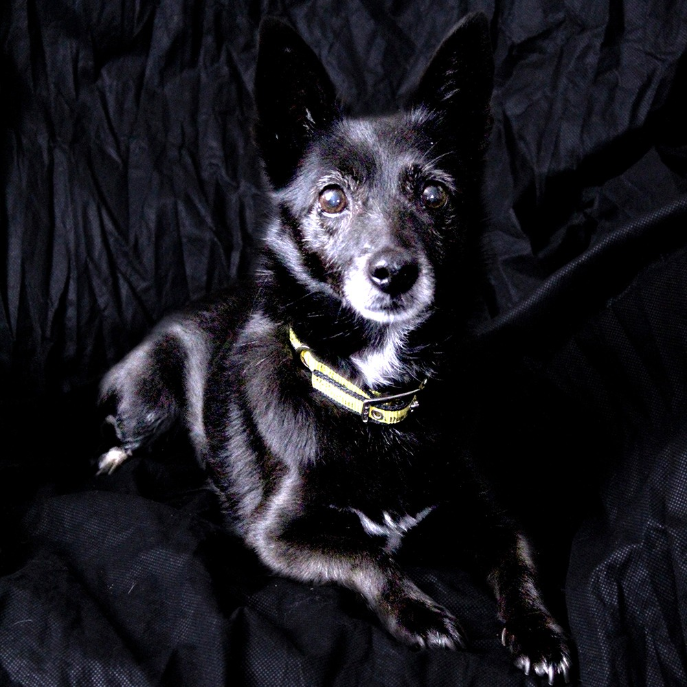 Happy #BlackFriday from 12 year old Poppy 💛 She came to us after her owner sadly passed away. She is very affectionate and would like to be the only pet in her new home 🏠 Poppy is at @DT_Ballymena 📍 bit.ly/2OOcDOe
