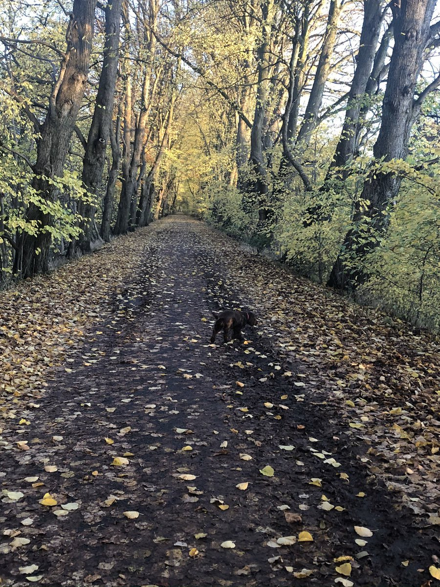 @Paula_Whylie @DoWell_uk @GmWalks @GmMoving One of my favourite pastimes .. especially with my Granddog Rosie#GMmoving #prestonwalks