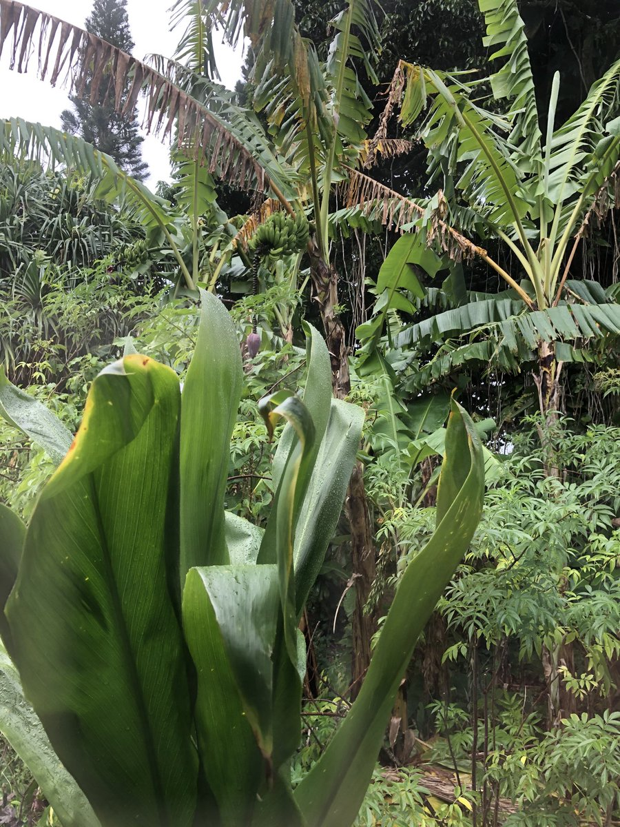 test Twitter Media - Overcast and raining in Haiku. #cmweather #Maui https://t.co/zH3wKeMNRC