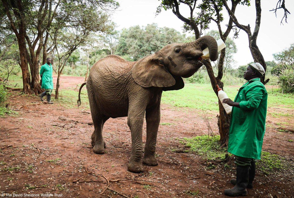 EKnoZ4TWsAAVkpO - The elephants of tomorrow