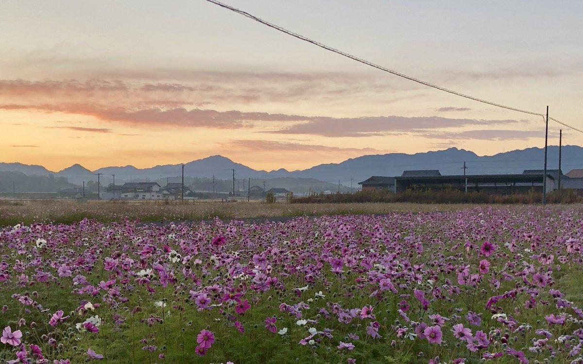 おはようございます。今朝のさぬき市は霜がおりてます。まもなく日の出。今日は今から岡山に参ります。