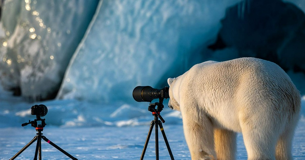 Our favorite finalists from the Comedy Wildlife Photography Awards  http:// pops.ci/wEIHnF    <br>http://pic.twitter.com/UHUT6RbBAL