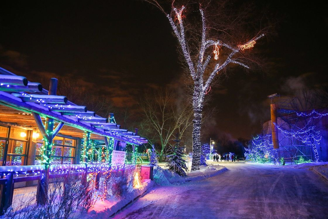 Happy National Christmas Lights Day! Have you been to the @calgaryzoo ZOOLIGHTS' Sensory Sundays? Every Sunday from 5:00pm-6:00pm the ZOOLIGHTS experience will be modified to accommodate sensory sensitive guests.   Learn more here: