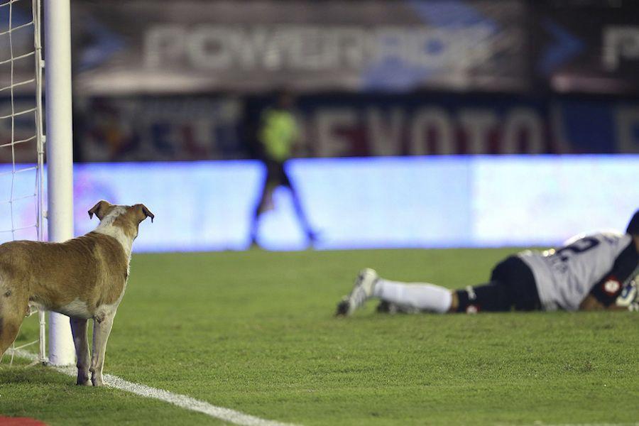 RT @ftbllrswanimals: A dog patiently watching Sebastian Torrico https://t.co/Zhh6oaxt56