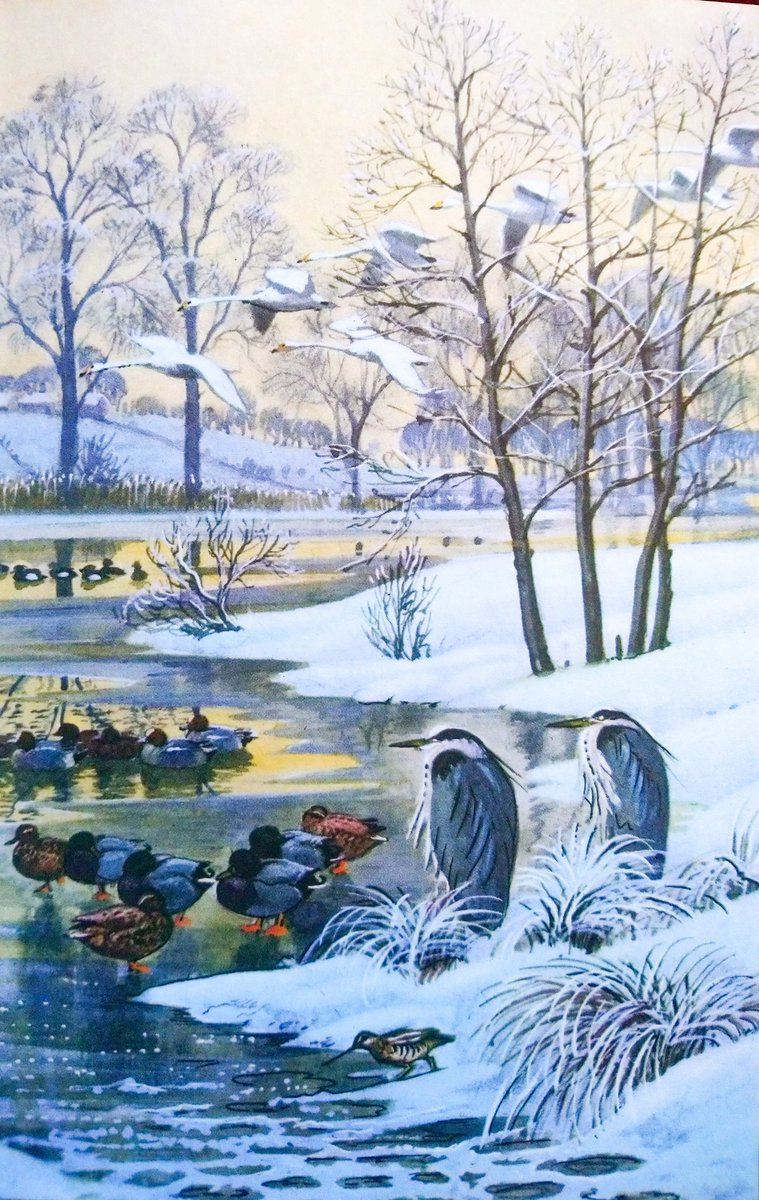 "#BookIllustrationOfTheDay is by C F  Tunnicliffe for ""What to look fir in Winter"" by E L Grant Watson. Really, we were spoiled to have such superb artists in budget Ladybird books weren't we? Beautiful, informative illustrations by one og the greatest wildlife artists ever. <br>http://pic.twitter.com/8780YqaPfe"