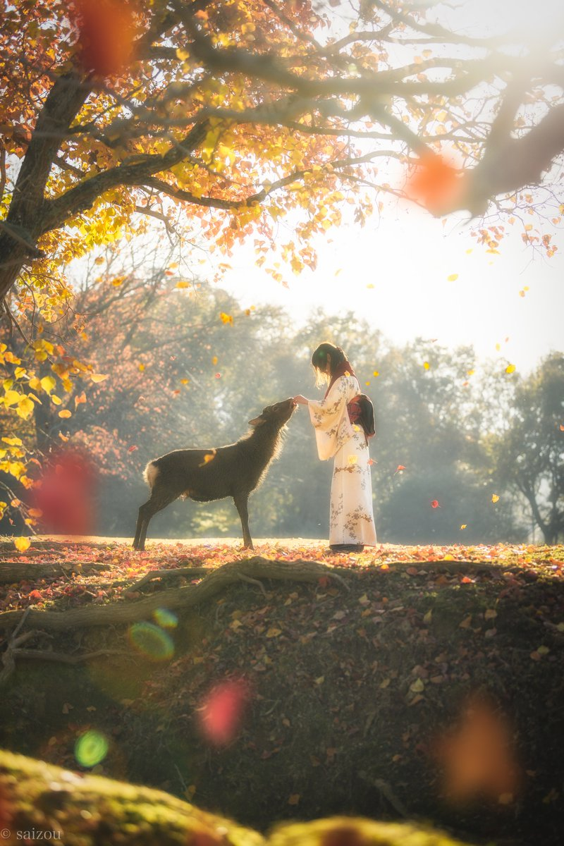 Autumnal Fairytale Moment Between a Girl and a Deer in Japan