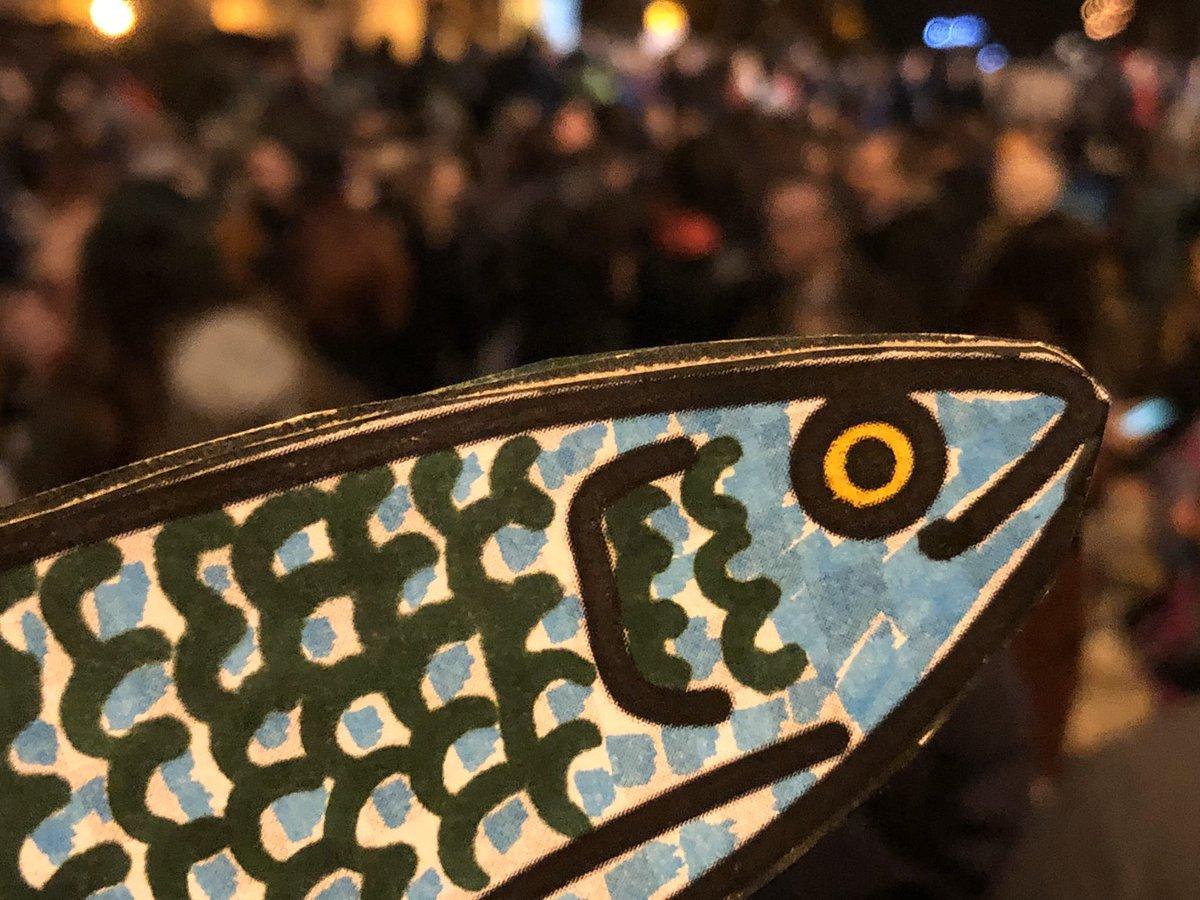Risultati immagini per sardine alessandria