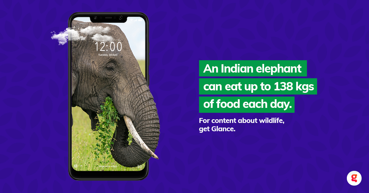 Get to know more about the animal kingdom with Glance. Get your Glance-enabled phone today! #UnlockZindagi