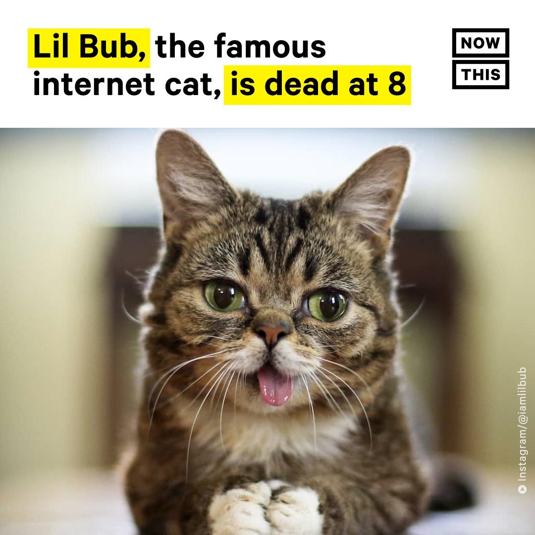 @nowthisnews's photo on Lil Bub