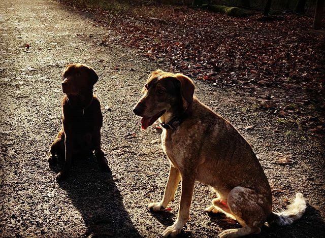 Hunderunde #DognamedKeisha #DognamedMurphy https://ift.tt/2RS8xrqpic.twitter.com/KGB1HAsUSX