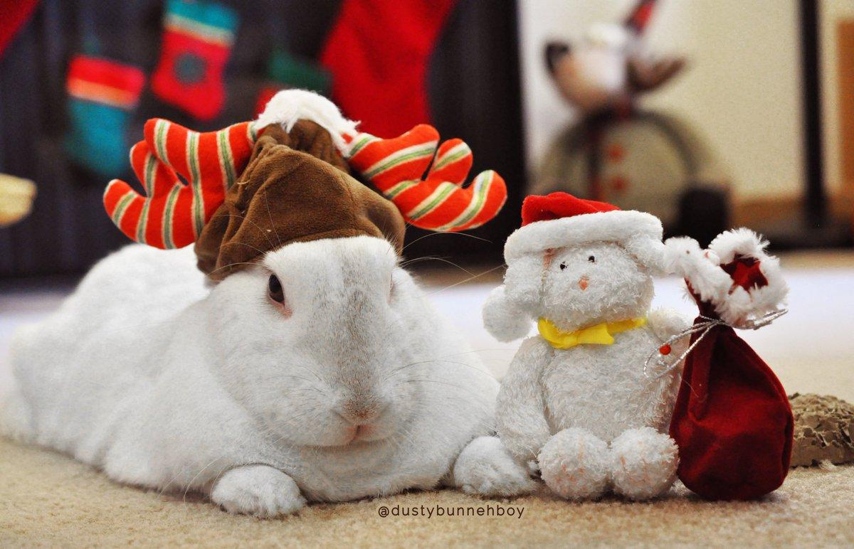 Me and Mini Me are ready for Christmas#Christmasspirit #bestfriends #bunnylove #readyforChristmas #BunnySanta #BunnyDeer #bunnylife #spoiledbunny #bunnyfriends #adoptedbunny #rescuedbunny #MiniMepic.twitter.com/kqDoZjrmUj