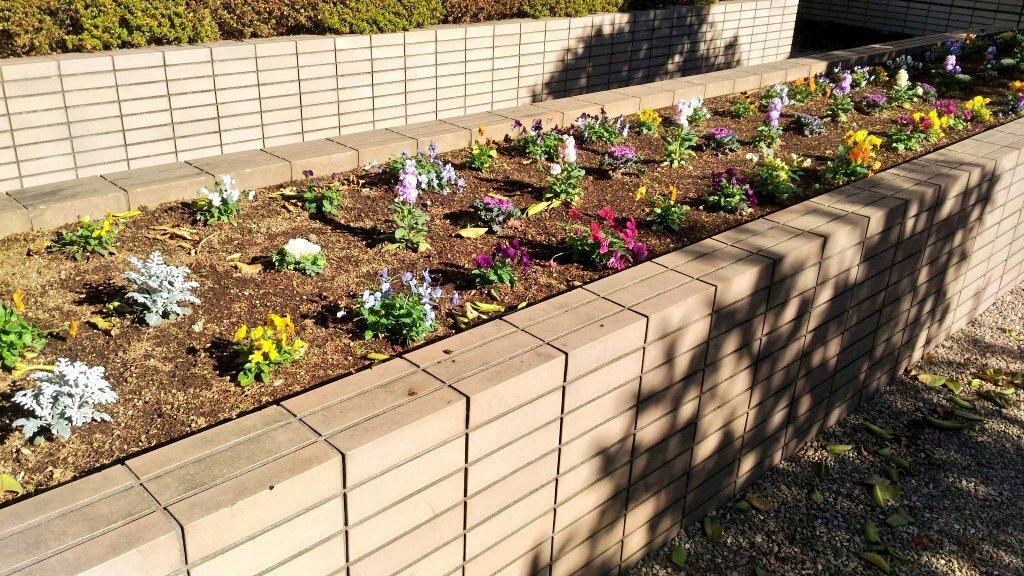 #写真が好きな人と繋がりたい #写真撮るの好きな人と繋がりたい #写真好きな人とつながりたい #色とりどり #可愛いお花 #可愛い花   #myparentshouse #flowerbed #courtyard #Flowers #prettyflowers #sopretty #lovelyflowers #flowerphotography #photography #photo #loveflowers #colorfulpic.twitter.com/Xw3UNMnGnw