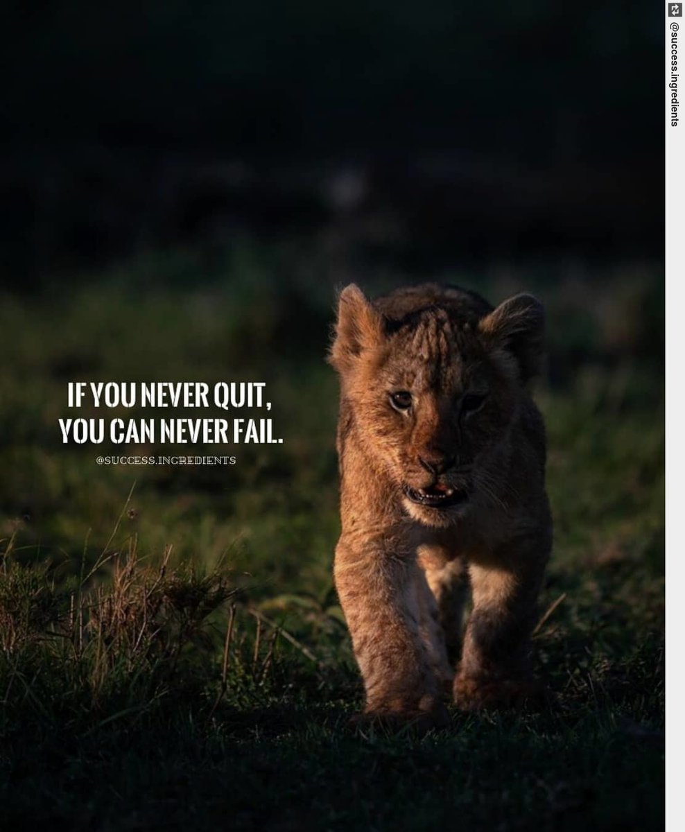 Have you ever thought about this?  -  #simba #neverquit #quotestoinspire #motivation #leadership<br>http://pic.twitter.com/kdXwrSEIEG