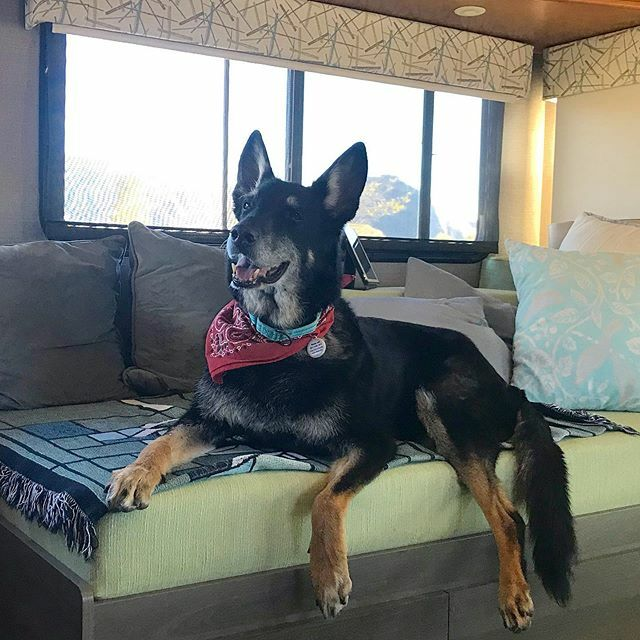 Feeling cute in my red Christmas bandana. What do you think? -Buster . . . #lifewithdogs #seniordogsrock #bestwoof #gsdlove #mydogisfamily #sweetdog #gopetfriendly #rvliving #dogsthattravel #dogsonadventures #sundayvibes #doglover https://ift.tt/34khEUtpic.twitter.com/US6PTTDRZf