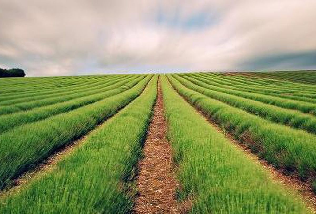 Thinking about investing in farmland? http://nicole-moreau.cb1.so/2pte4v pic.twitter.com/btsFjF6aoz