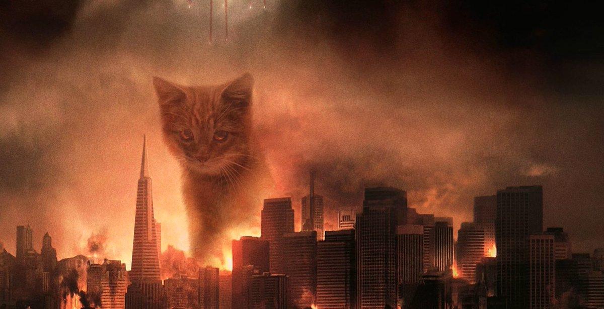 появляется картинки коты апокалипсиса годами