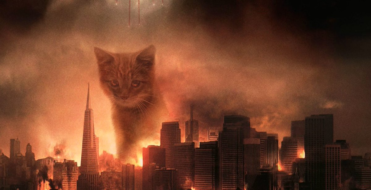 коты захватили мир картинки гуляя