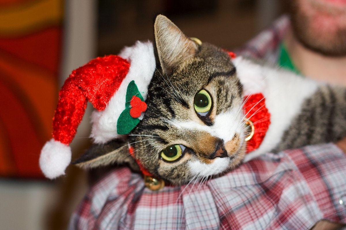 Our latest post (Katzenworld's Last Minute Christmas Gift Ideas!) is now live! Please check it out on https://katzenworld.co.uk/2019/12/15/katzenworlds-last-minute-christmas-gift-ideas/ … #cats #katzenworld #catlovers :D pic.twitter.com/h8wqUrV1yk