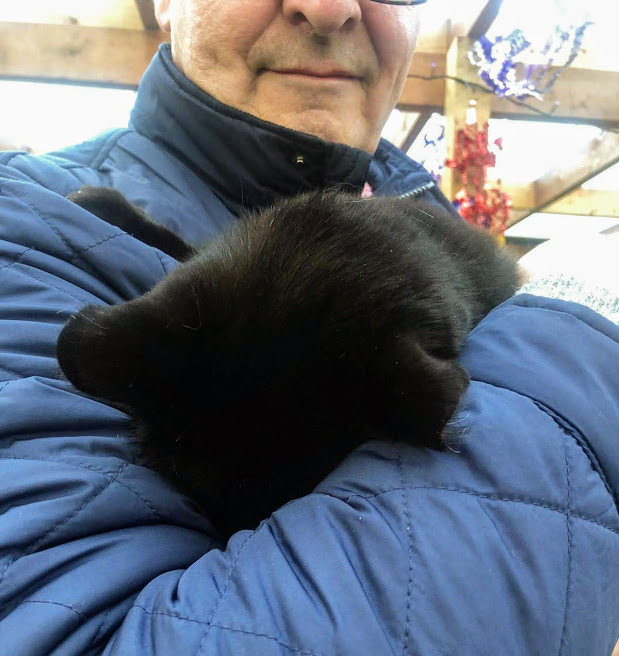The humans had a Christmas party at the allotments yesterday. I joined in too. After a while I felt a bit sleepy and one of my favourite humans picked me up. I had a little nap while he held me and felt much better afterwards.