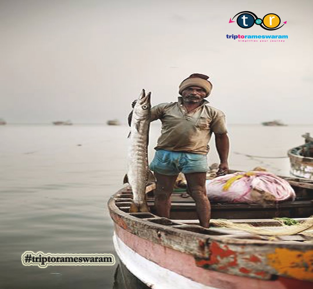 As the Visions of #redfish danced in my Head!!! #triptorameswaram #rameswaram #onedaytrip #tamilnadutourism #IncredibleIndia #BetterTogether #triptopamban #Travelgoals #rainyday #Southindiatrip  #ExpatExploreTravel #picsoftheday #rainypamban #inspiredbynature #EnchantingTamilnadupic.twitter.com/QNsOfU4f0F