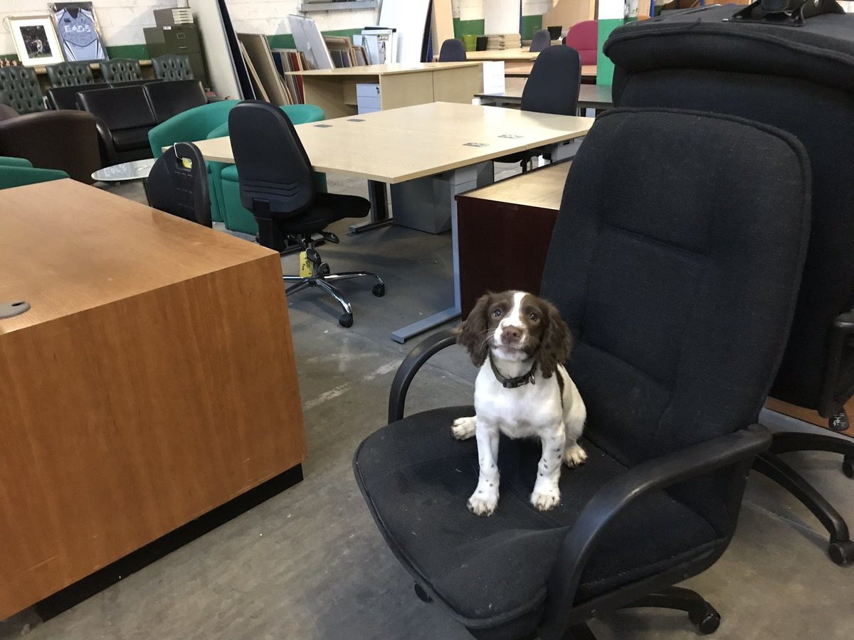 Good morning, we would like to introduce you to the newest member of the team. Meet Storm the most aptly named dog ever she's like a mini hurricane.  Please feel welcome to visit our 12,000 sq ft showroom with ever changing quality items.  #itsadogslife #officefurniture #firstdaypic.twitter.com/rZiV6gO7lZ