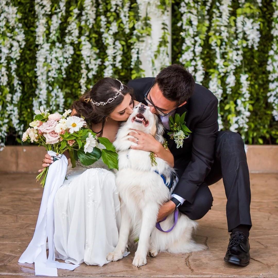 Book Handlery San Diego as your wedding venue - we'll make sure your nuptials go paw-fectly! IG: @evetheaussie   #MondayMotivation #SanDiegoWeddings #WeddingVenue #WhiteWedding #WinterWedding #SpringWedding #handleryhotelpic.twitter.com/uIQUoO6ZJx