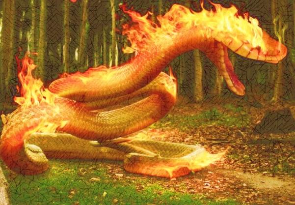 Será que o sonho da lagarta-de-fogo é ser o Boitatá?  pic.twitter.com/1TScRTI3WW